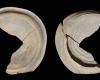 Fragment einer Tellerkachel mit glattem Innenfeld un zentralem Knauf, unglasiert, 2. Hälfte 14. Jh., H. 15,4 cm, Br. 10,3 cm, Speyer, Historisches Museum der Pfalz, urspr. Lemberg, Burg