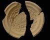 Fragment einer Tellerkachel mit Innenfeld mit Rose, unglasiert, Ende 14. Jh., Lörrach, Museum am Burggraben, urspr. Burg Rötteln